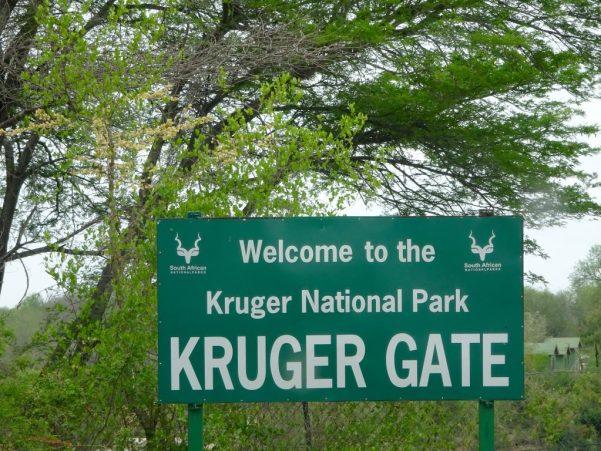 Kruger-national-park-1024x768